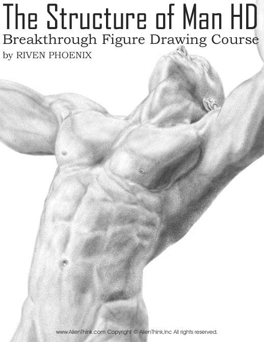 طراحی ساختار بدن انسان - فیگور انسان