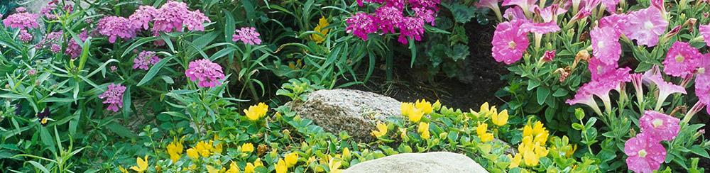 آموزش-نگهداری-گیاهان-در-باغ-و-پاسیو