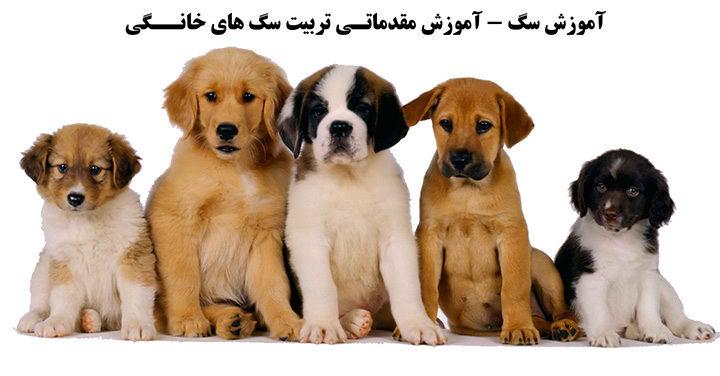آموزش مقدماتی تربیت سگ