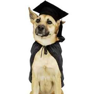 آموزش سگ