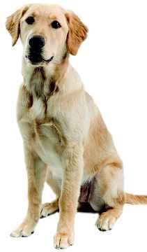آموزش حرفه ای سگ