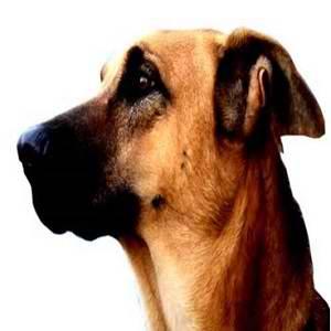 آموزش سگ نگهبان