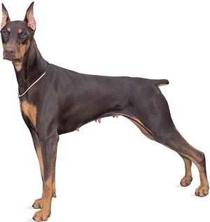 آموزش سگ شکاری