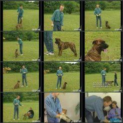 آموزش تخصصی سگ