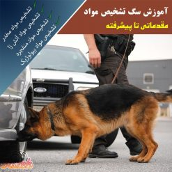 آموزش سگ مواد یاب