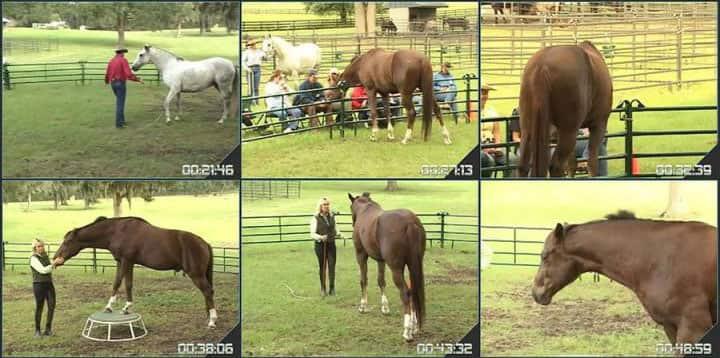 آموزش رفتار اسب با پت پارلی